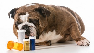 Choose Right Dog Nutritional Supplements-3.jpg